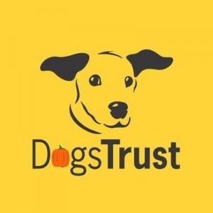 Dog T